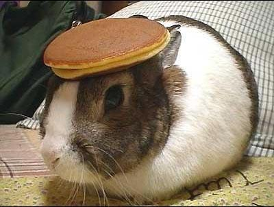 a picture of a bunny with a pancake on it's head